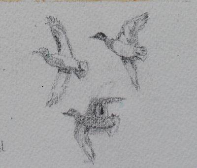 Salt marsh pencil sketch of teal