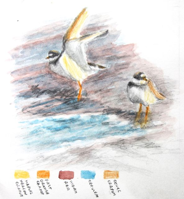 Salt marsh sketch - ringed plover