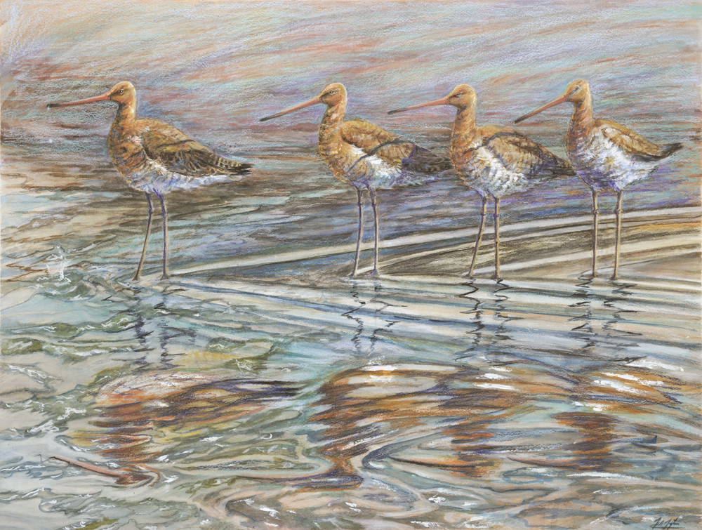 Godwits, Gannets and Geese